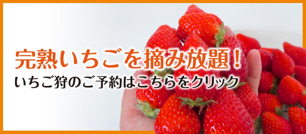 """""""いちご狩り"""""""